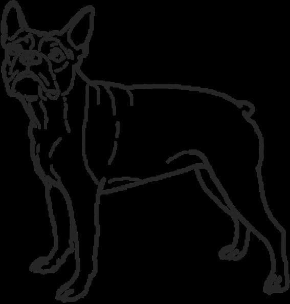 bulldog-02-2-x@3x