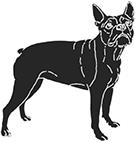 [www.nbh.co][987]bulldog-2-x3x