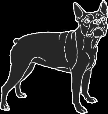 bulldog-2-x@3x